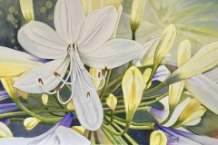 "Watercolour ""Agapanthus"" 28cm x52cm"